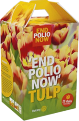 Box 25 tulip bulbs